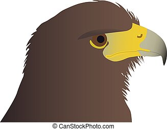 head of the eagle color