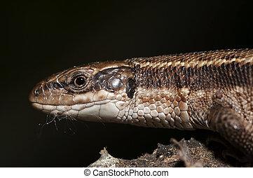 head of the lizard