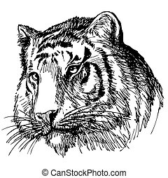 head of tiger hand drawn