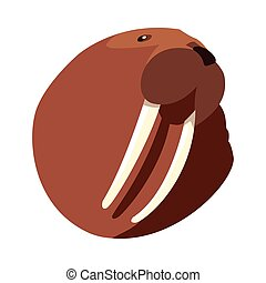 head of walrus on a white background