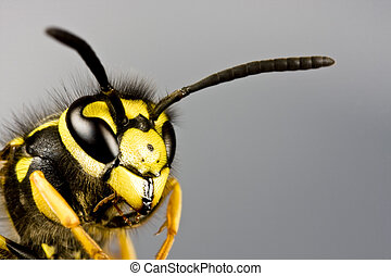 head of wasp in grey background - head of wasp in extreme...