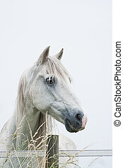 Head of white horse with light blue background - vertical...