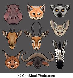 Head of wild animals set, portrait of hippo, lynx, fox, fenech, lemur, giraffe, antelope, muskox and zebra hand drawn vector Illustrations