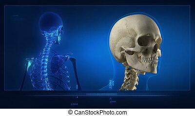 Head scanning in progress