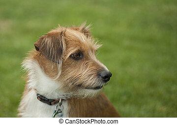 Head shot of Terrier