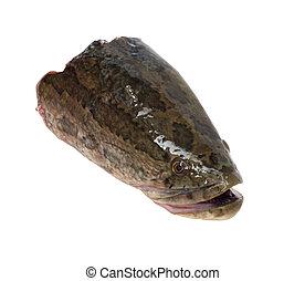 head snakehead