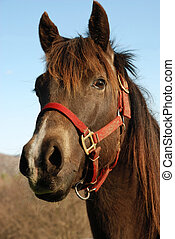 Head study of horse - Proud head shot of two year old filly ...
