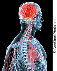 3d rendered illustration of a transparent head with highlighted brain