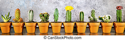 Header, miniature potted cactus plants in a line, grey background