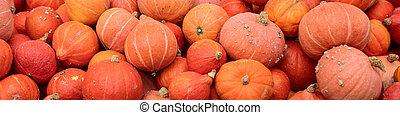 Header with a lots of hokkaido pumpkins, Red kuri squash background