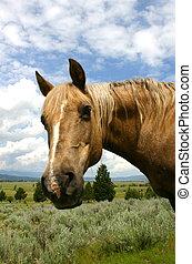 Headshot 2 - Portait of a horse