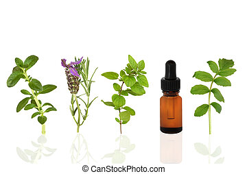 Healing Herbs - Herb leaf selection of peppermint, lavender,...