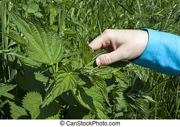 Healing with stinging nettle leaves