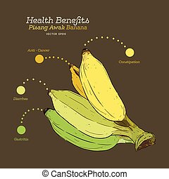 Health benefits of banana ,hand draw vector.