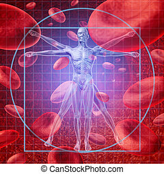 Health care research medical concept with a Vitruvian human skeleton man and body with a group of floating red blood cells circulating in a vein.