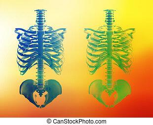 Healthcare - Illustration of two skeletons.