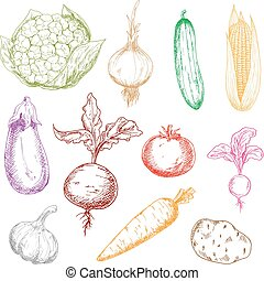 Healthful fresh multicolored vegetables sketches