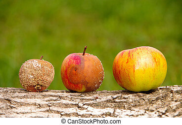 Healthy and rotten apple on wooden background
