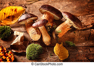 Healthy autumn harvest of fungi and rose hips