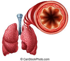 Healthy Bronchial Tube