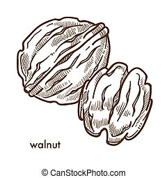 Healthy delicious walnut in hard shell and peeled. Useful...