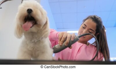 Healthy Dog In Pet Shop With Woman Trimming Hair