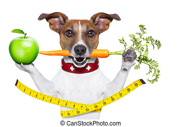 healthy dog with carrot in mouth and measuring tape around...