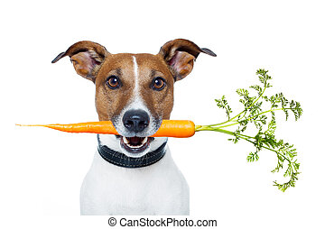 healthy dog with a carrot