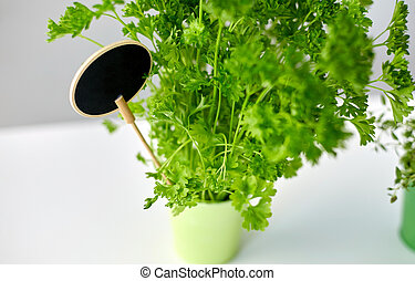 green parsley herb with name plate in pot on table