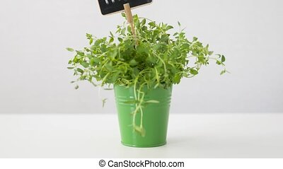 green thyme herb with name plate in pot on table - healthy...