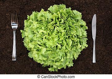Healthy eating lettuce in vegetable garden - Healthy...