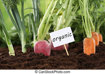 Healthy eating organic vegetables in garden