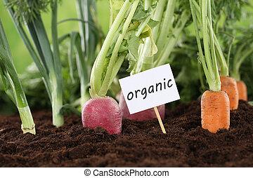 Healthy eating organic vegetables in garden