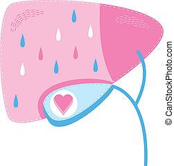 Healthy Gall Bladder - A concept for a healthy gall bladder.