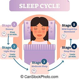 Healthy human sleep cycle vector illustration diagram with ...