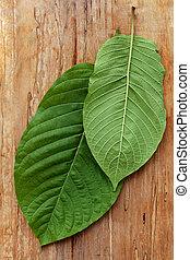 Healthy kratom leaves. - Healthy kratom leaves on wooden...