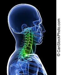 healthy neck