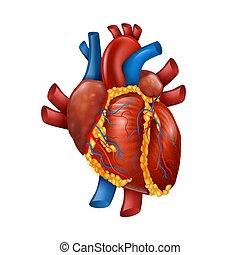 Healthy Realistic Human Heart Vector Illustration