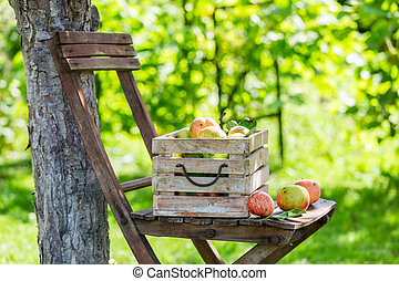 Healthy red apples in wooden box in summer
