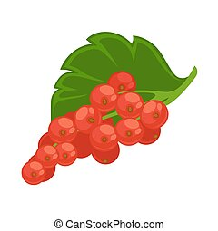 Healthy sour red currant with green leaf isolated iIlustration