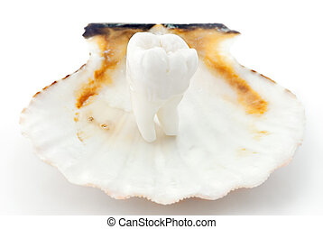 Healthy teeth concept. Real human wisdom tooth in an oyster...
