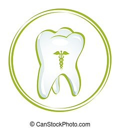 healthy teeth - illustration of healthy teeth on white...