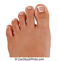 Healthy toes close up with a human foot with clean nails as a symbol of treating and diagnosing feet in the medical field of podiatry isolated on a white background.