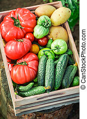 Healthy tomatoes and cucumbers in greenhouse