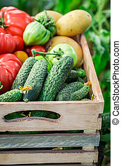 Healthy tomatoes and cucumbers in wooden box