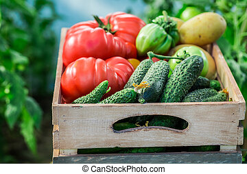 Healthy tomatoes and cucumbers to groceries