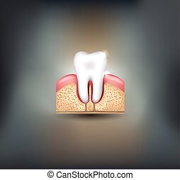 Healthy tooth, gums and bone
