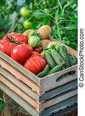 Healthy vegetables in greenhouse