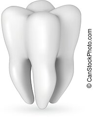 Healthy white molar tooth realistic vector illustration isolated on white background.