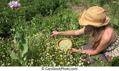 healthy woman pick camomile herb flowers in rural house yard. 4K